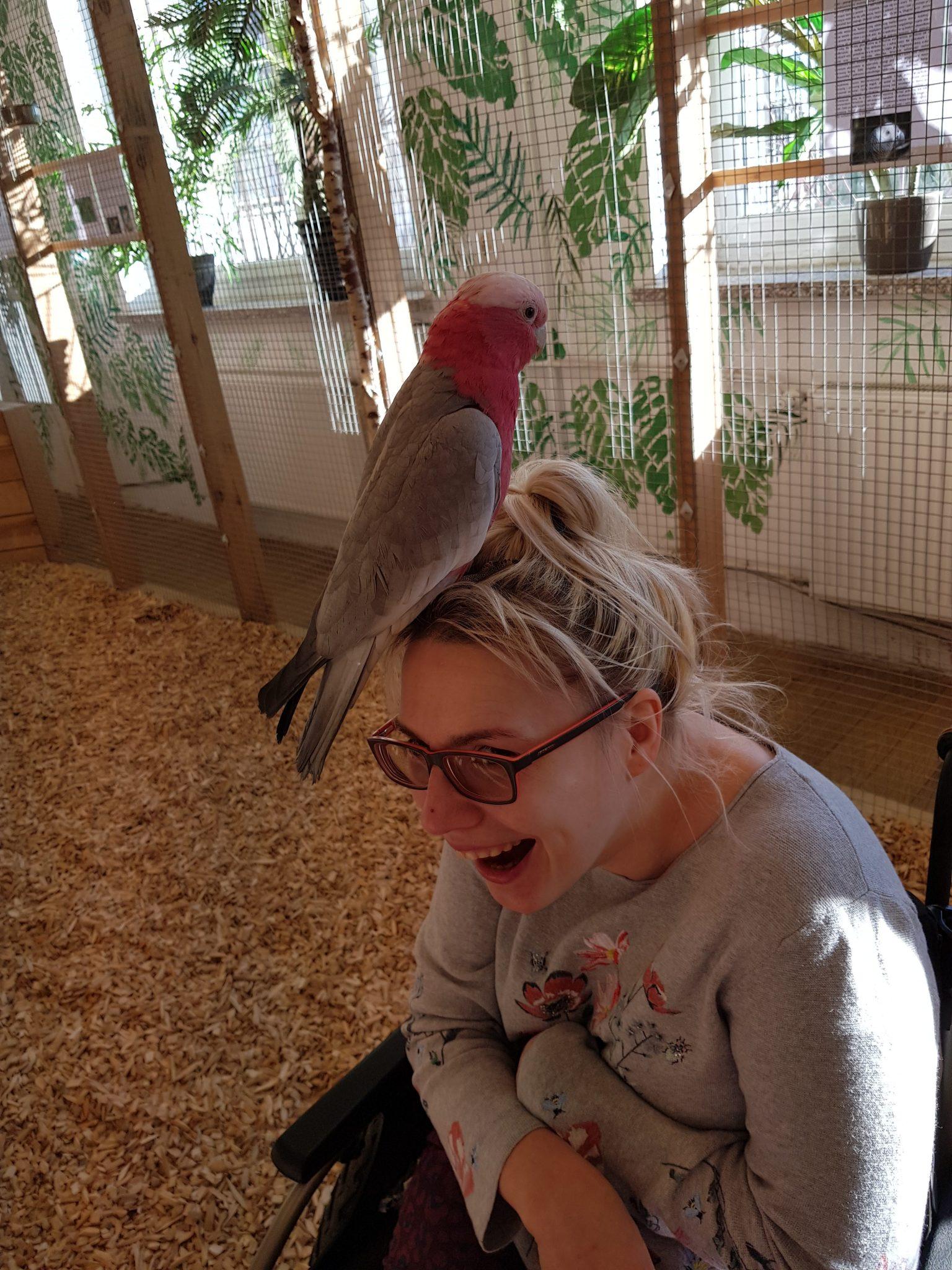 Wiosenny trend w okryciach głowy: papużnik różowy twarzowy